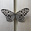 papered butterfly specimen for sale Australia