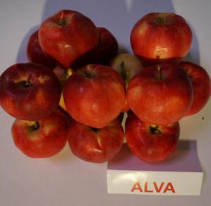 """Obuoliai """"Alva"""""""