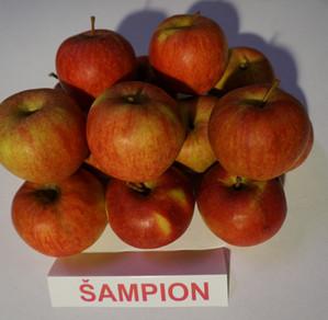 "Obuoliai ""Šampion"""