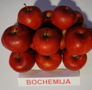 """Obuoliai """"Bochemija"""""""
