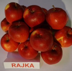 "Obuoliai ""Rajka"""