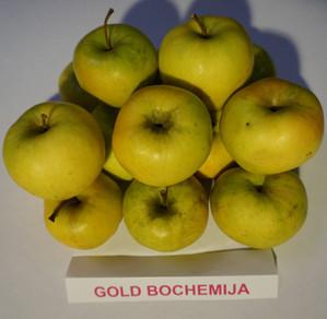 """Obuoliai """"Gold bochemija"""""""