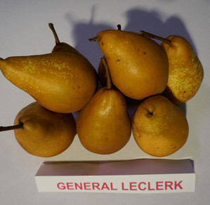 "Kriaušė ""General Lecrelk"""