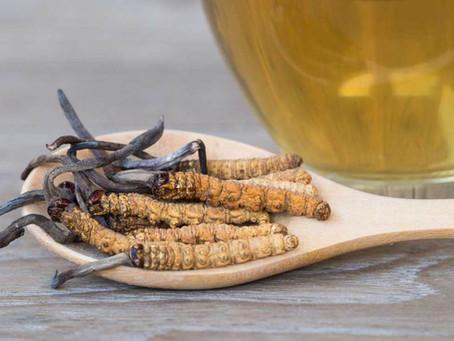 Cordyceps (Housenice čínská)