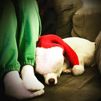 Holiday Do's & Don't's for Dogs