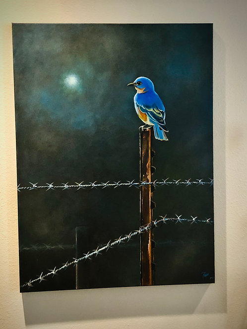 Blue Bird on Barbed Wire