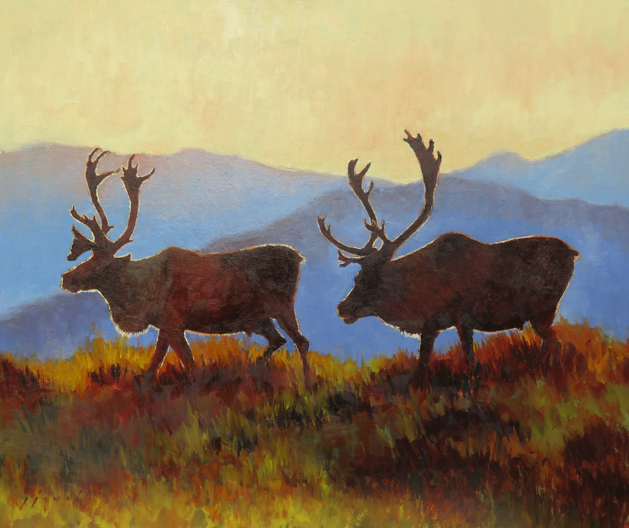 Caribou at Sunrise, Tonquin Valley