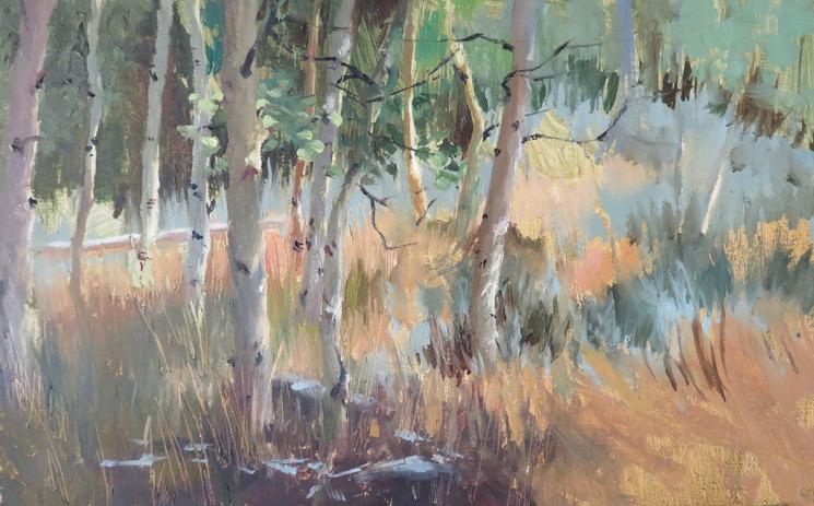 Aspens in the Sierra