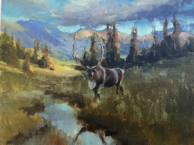 Caribou at Dawn