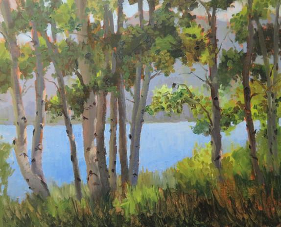Aspens at Gull Lake