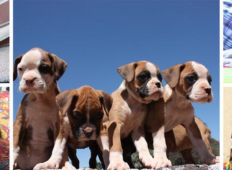 Pet Friendly - Trae Tu Mascota sin Costo Extra