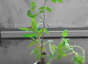 plantas ofendidas & reconciliações
