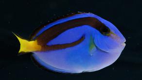 3 Ways To Save Nemo & Dory: Best Alternatives to Marine Aquarium Fish