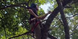 Tree trimming care Vermont