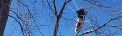 trees-inc-vt-tree-care