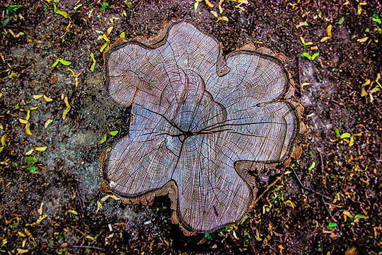 stump grinding services in vt