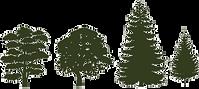 Vermont tree care