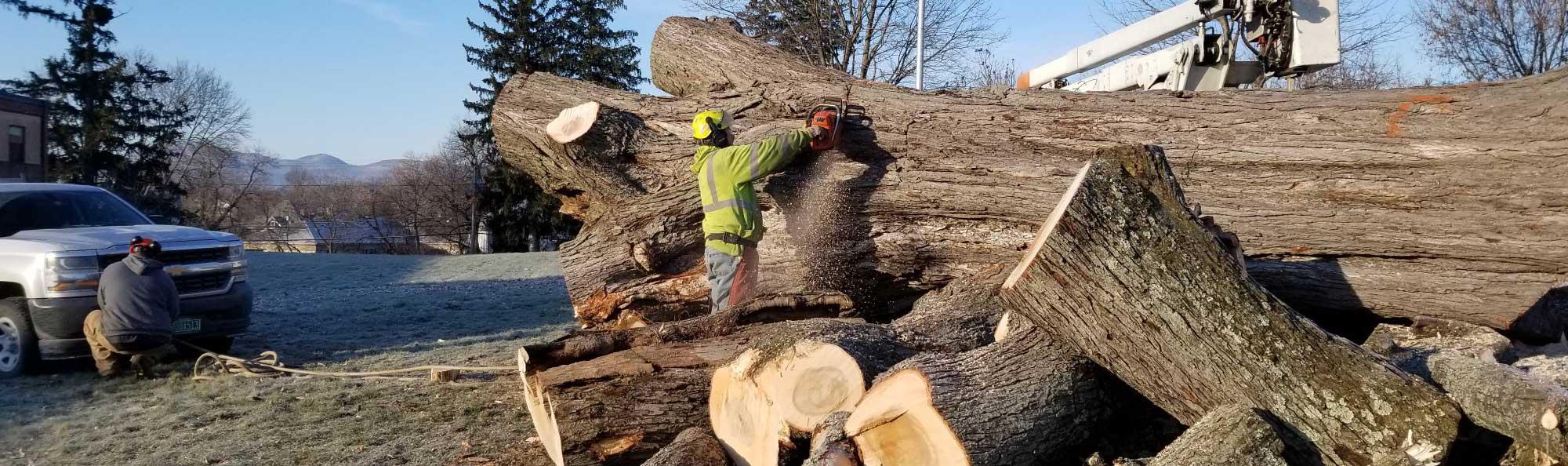 vermont-tree-removal