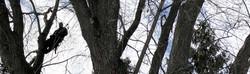 vermont-certified-arborists