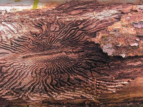 integrated pest management program for trees