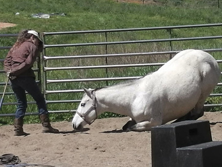 How to Teach Your Horse To Lay Down