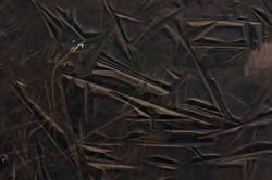 2013-01-08---Brrrrr-4---frozen-pond-closeup-2