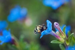 2014-05-10---Bee-1