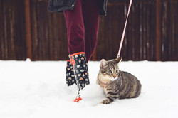 2017-02-06---Snow-Day-Cat-4
