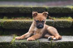2018-02-08 - Bainbridge Puppy visit 6 cr