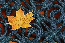 P_wrought-iron-in-autumn_lindsaycalcerano