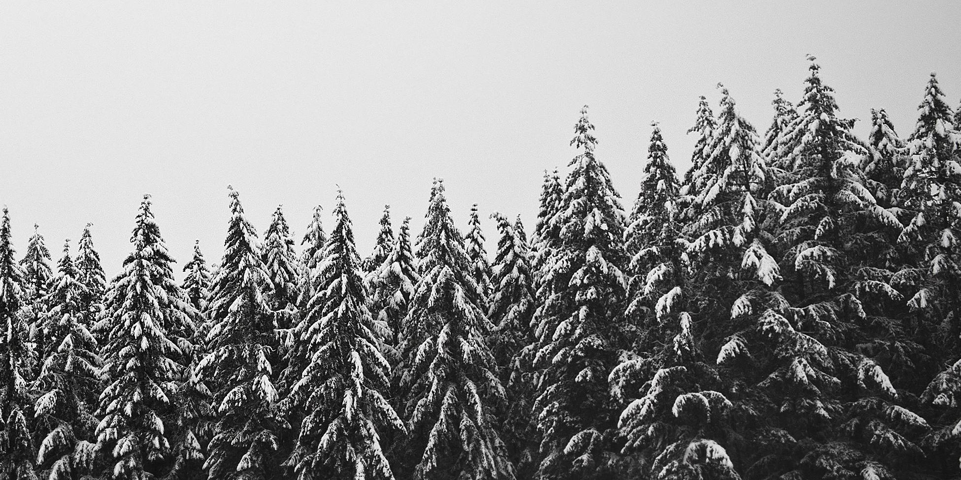 2017-02-06 - Snow Day 27 B&W cropped