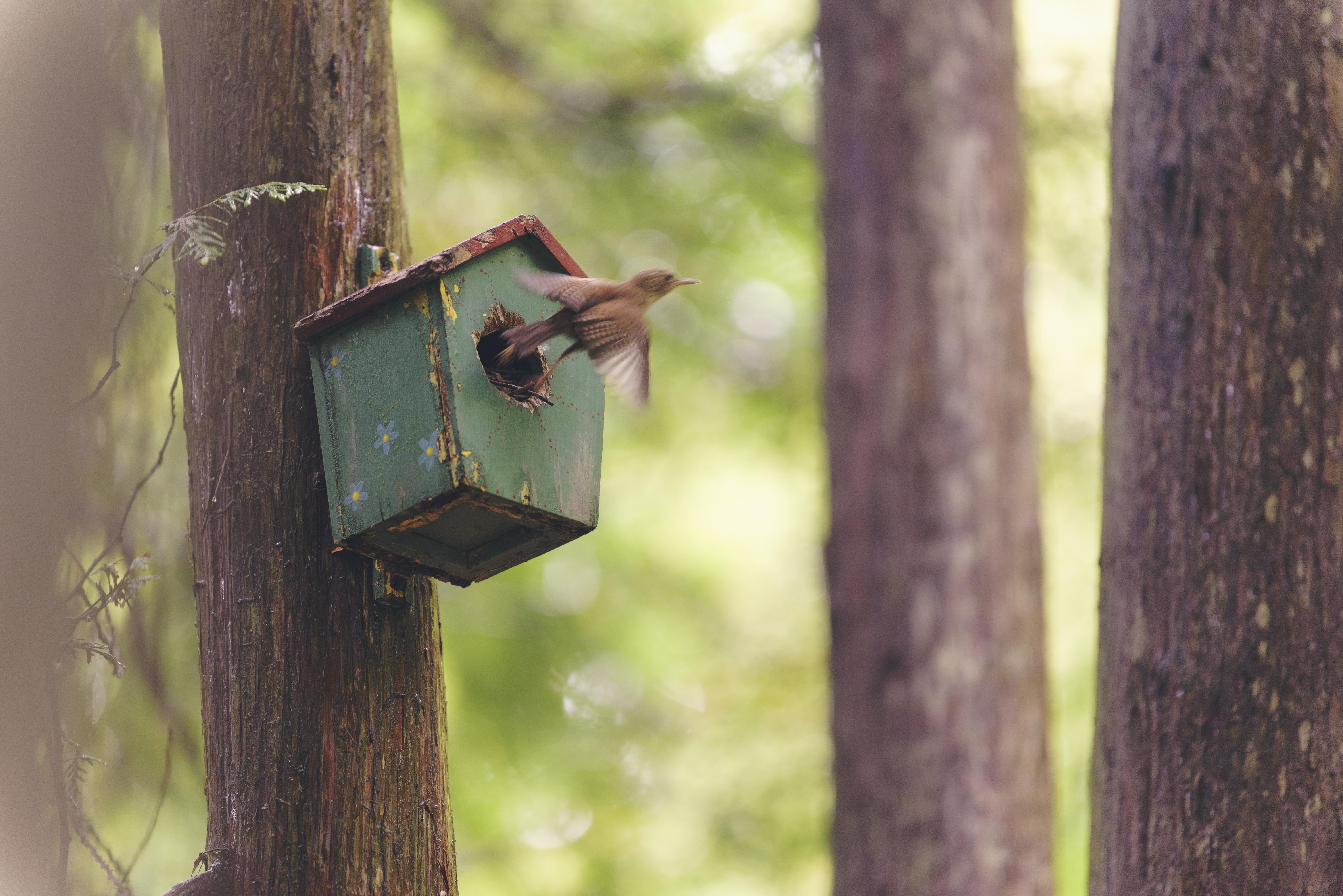 2018-06-24 - Cottage Day 2 birds 20