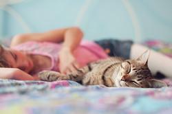 2013---Afterschool-Cat-Cuddles