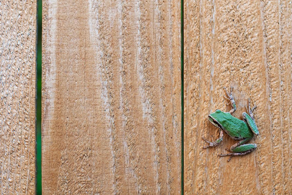 2013-07-21---Hot-Tub-Frog