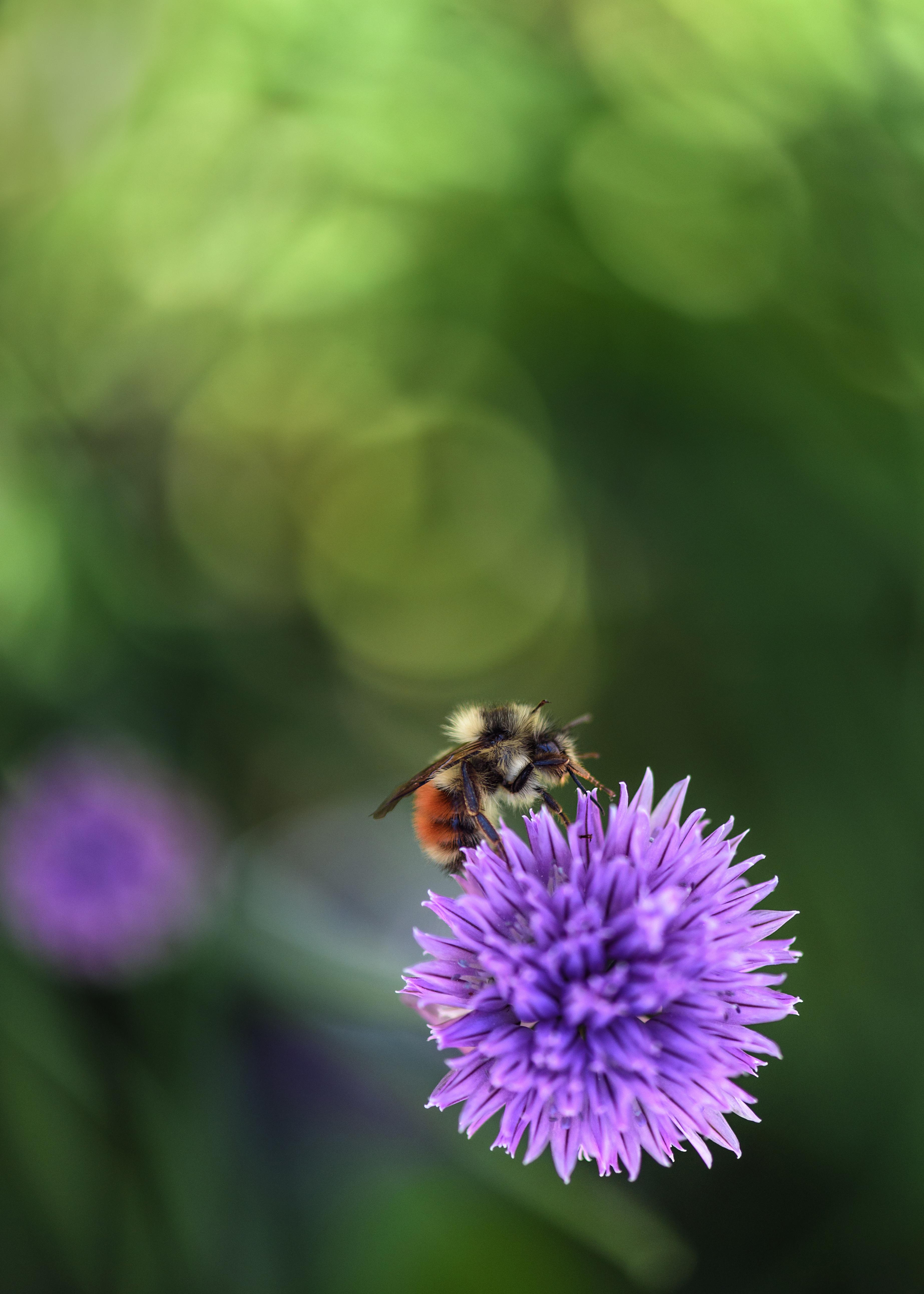 2018-05-23 - Bee cleaning pollen 5x7 SEN