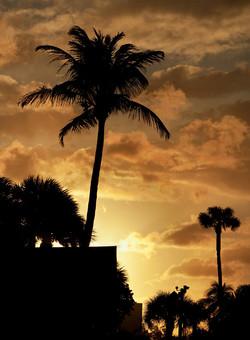 2012-03-15---Palms-at-Sunset