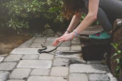 2018-05-24 - Snake In the Garden 3 color