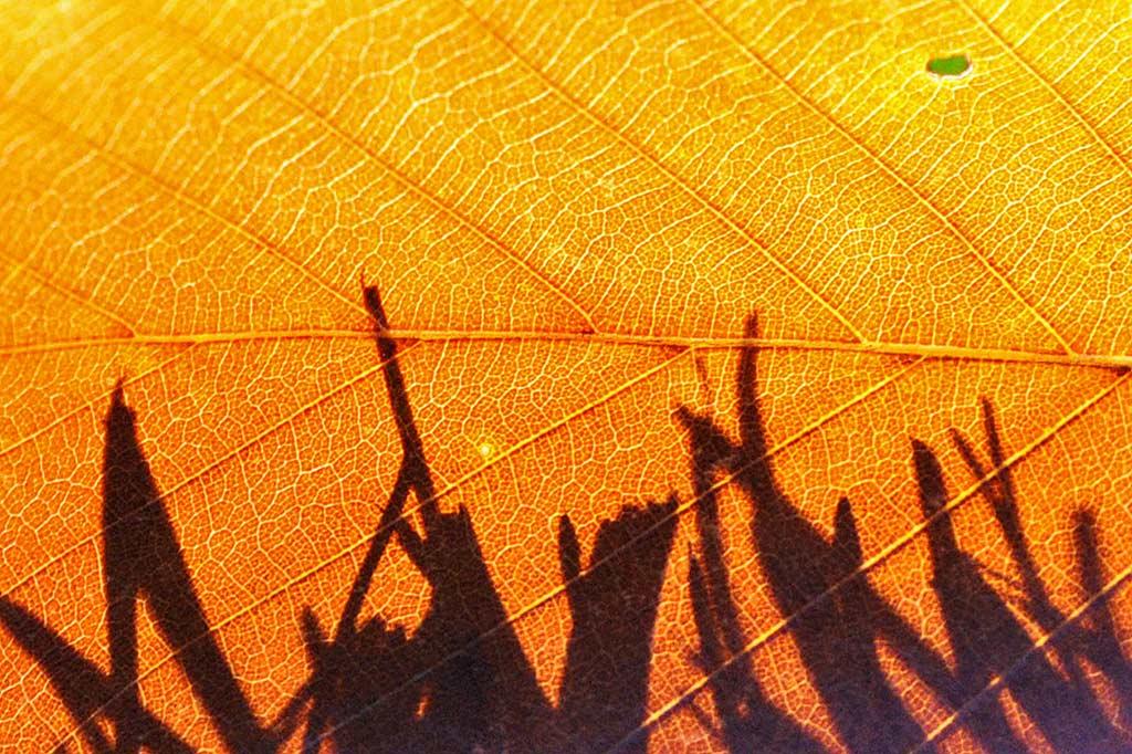 T1_shadow-grass_lindsaycalcerano