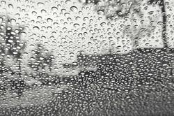 2013----Rainy-Library-Sammamish