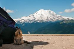 2014-07-25---Mt-Rainier-View---Chipmunk-1