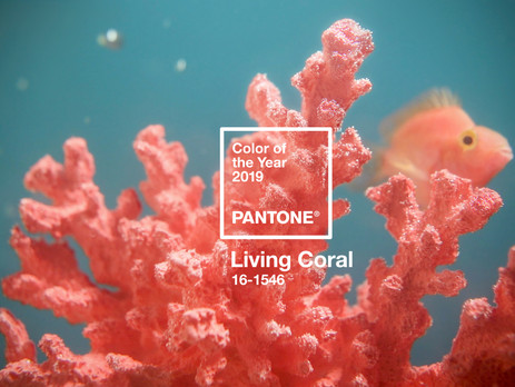 Color of the Year 2019 announced: PANTONE® 16-1546 Living Coral