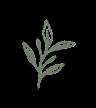 emmanortonflowers_foliage_olive.png