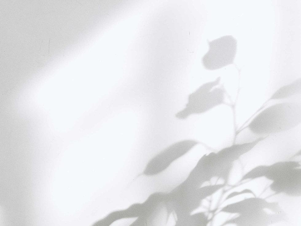 ivy-inks-paper-co-weronika-photography-brand-design-shadow-background.jpg