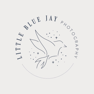 Blue Jay Photography