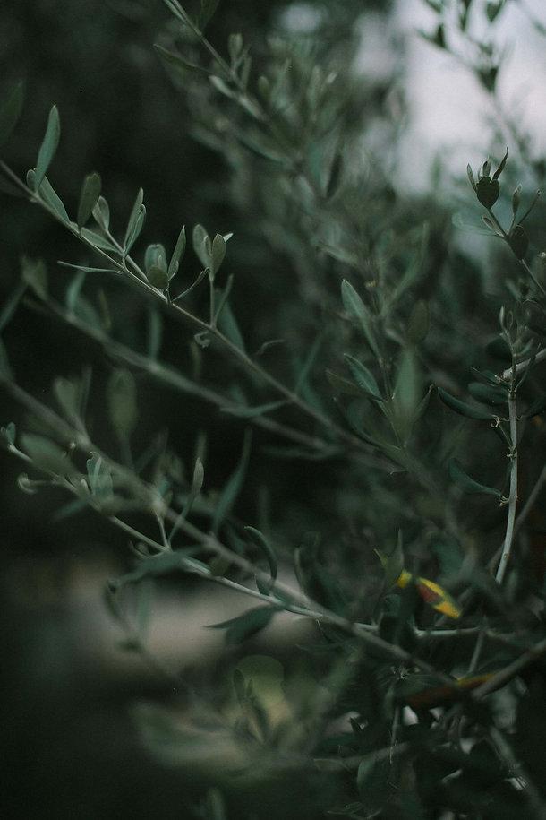 ivy-inks-paper-co-olive-grove-restaurant-logo-design-foliage-photography.jpg