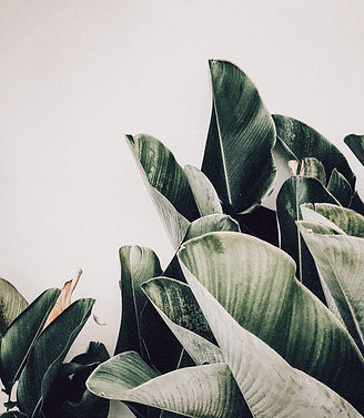 ivy-inks-paper-co-laura-simmons-hairdressing-branding-design-photography-palm-plant.jpg