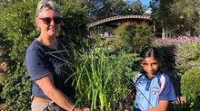 Stage 3 native planting for NAIDOC