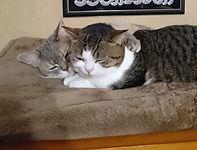 猫7_edited.jpg