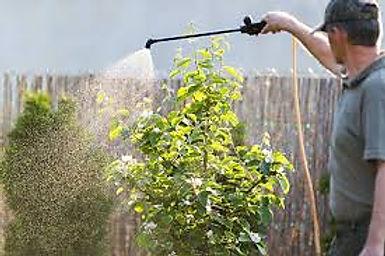 PreEmergent.jpg