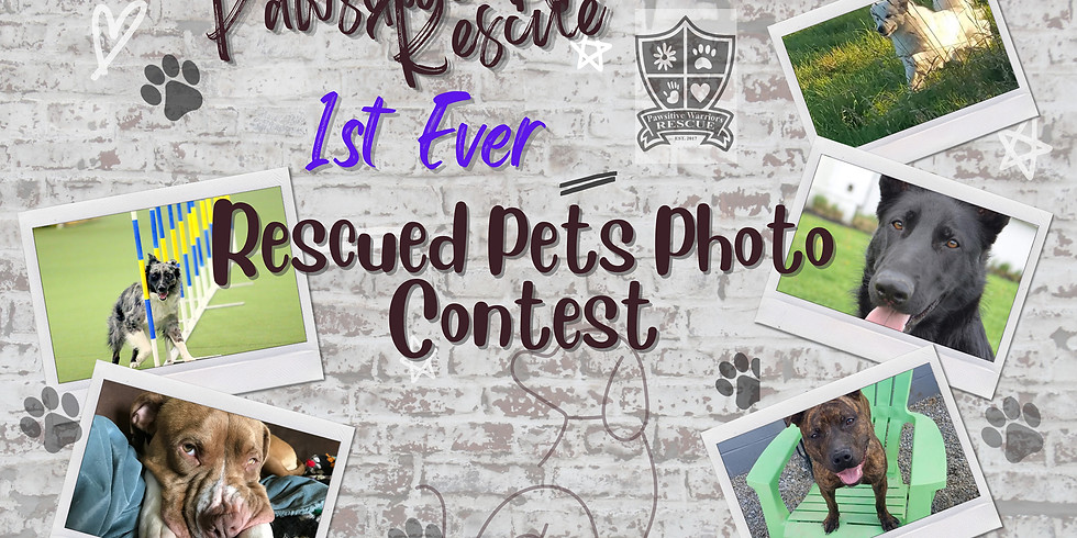Rescued Pets Photo Contest